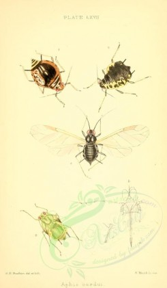 insects-16342 - 030-aphis [1848x3169]