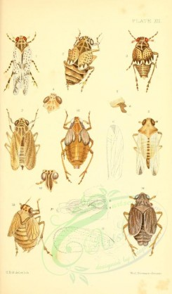 insects-16394 - 012-liburnia [1838x3133]