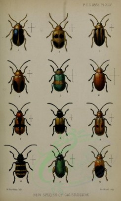 insects-16542 - oides, mesodonta, pachytoma, megalognatha, merista, physonychis, systena [1765x2924]