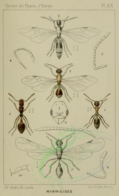 insects-16741 - temnothorax, stenamma [1281x2103]