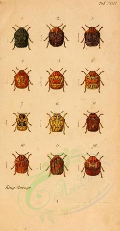 insects-17252 - chlamys, 3 [1598x3066]