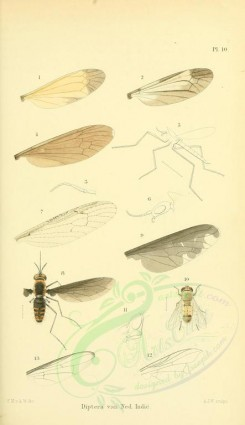 insects-17669 - bombylius, anthrax [1913x3315]