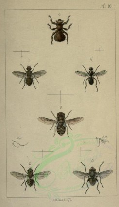 insects-17789 - bucentes, stomoxys, musca, sepsis, oestrus, melophagus [1746x3033]