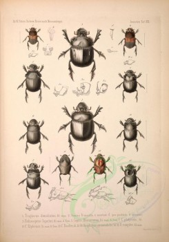 insects-17933 - 012-tragiscus, heliocopris, copris, onthophagus [4460x6369]