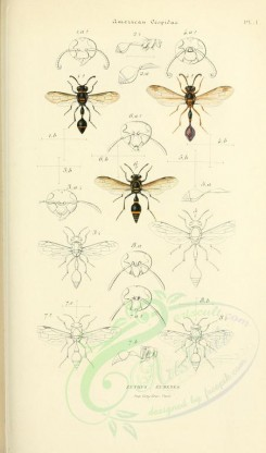 insects-17968 - zethus, eumenes [2026x3439]