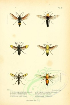 insects-18263 - thynnus, pompilus, priocnemis [1853x2776]