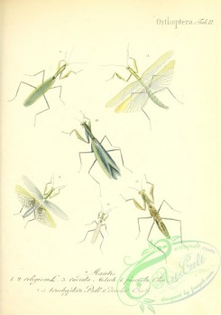 insects-19201 - 002-mantis