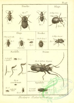 insects_bw-00871 - 031-pimelie, blaps, elops, erodie