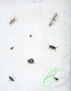 insects_bw-01299 - 017-unspecified