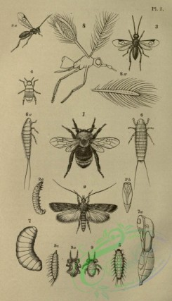 insects_bw-01642 - 001-unspecified