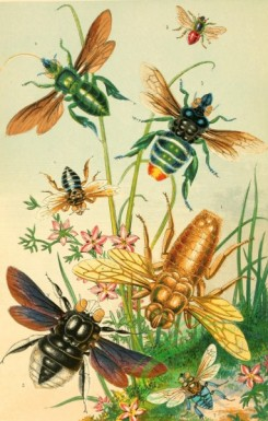 insects_life_scenes-00005 - Bees, Counterfeits, xylocopa, euglossa, chrysantheda, anthophora, crocisa
