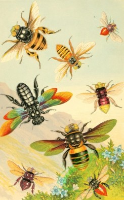 insects_life_scenes-00008 - Exotic Bees, centris, oxaea, fuglossa, xylocopa