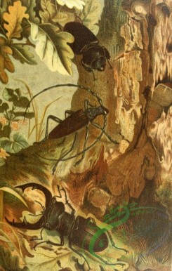 insects_life_scenes-00042 - 001-Stag-Beetle, Longicorn Beetle