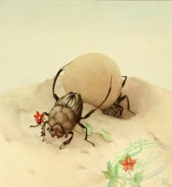 insects_life_scenes-00087 - Sisyphus