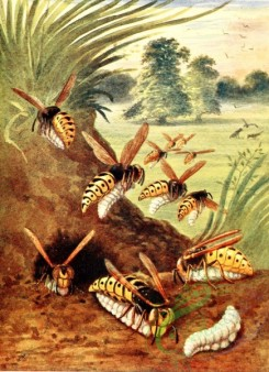 insects_life_scenes-00099 - Wasp, 2
