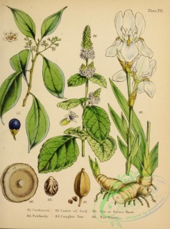 iris-00230 - Cardamom, Castor Oil Seed, Iris or Orrice Root, Patchouly, Camphor Tree, Nux Vomica