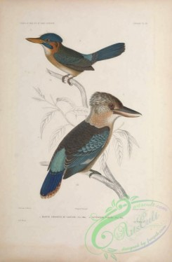 kingfishers-00152 - Martin Chasseur de Salusse (Fr),  Acteonide Variee (Fr)