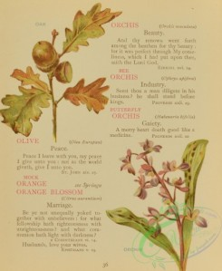 language_of_flowers-00075 - 020-Oak, Orchis