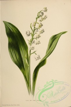 lilies_flowers-00669 - Lily of Valley [3104x4665]