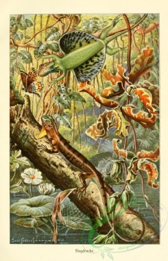 lizards_and_tritons-00089 - Draco Volans