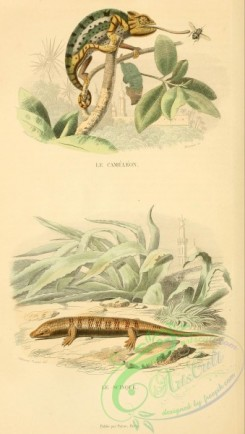 lizards_and_tritons-00112 - 003