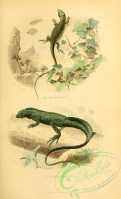 lizards_and_tritons-00113 - 007