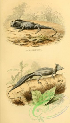 lizards_and_tritons-00114 - 008