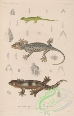 lizards_and_tritons-00233 - 009