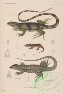 lizards_and_tritons-00234 - 021