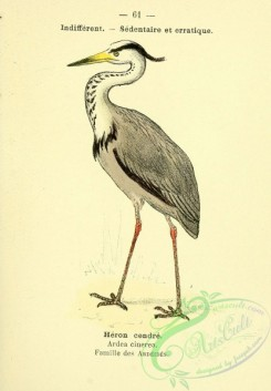 long_legged_birds-00010 - Grey or Mauritanian Heron