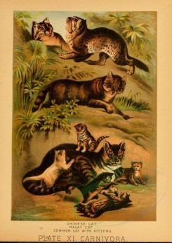 mammals-02214 - CHINESE CAT, MALAY CAT, COMMON CAT WITH KITTENS [1966x2776]