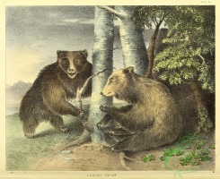 mammals-06840 - Grizzly Bear