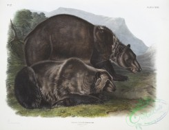 mammals-07143 - 2437-Ursus ferox, Grizzly Bear, Males