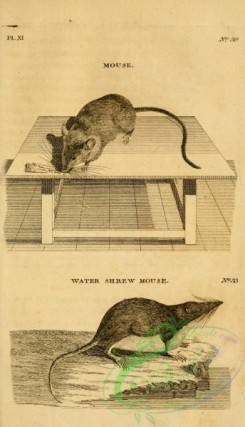 mammals_bw-00617 - 011-Mouse, Water Shrew Mouse