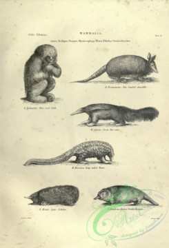 mammals_bw-01420 - 015-Three toed Sloth, Nine-banded Armadillo, Great Ant-eater, Long-tailed Manis, Spiny Echidna, Rufous Ornithorhynque