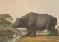 mammals_full_color-00060 - Hippopotamus
