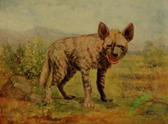 mammals_full_color-00126 - Hyaena