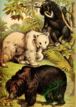 mammals_full_color-00153 - Syrian Bear, Sloth Bear, Bornean Sun Bear