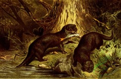 mammals_full_color-00180 - Otter
