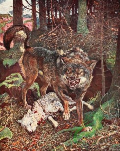 mammals_full_color-00212 - BRITISH WOLF