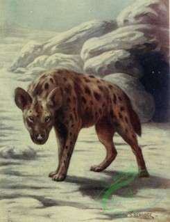 mammals_full_color-00238 - SPOTTED HYAENA