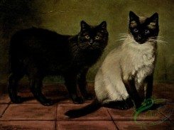 mammals_full_color-00252 - BLACK MANX AND ROYAL SIAMESE CATS