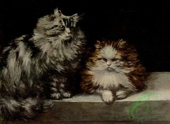mammals_full_color-00258 - SILVER TABBY AND ORANGE-AND-WHITE PERSIANS