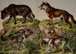 mammals_full_color-00275 - Striped Hyena, Spotted Hyena, Greyhound, Pointer, Wolf
