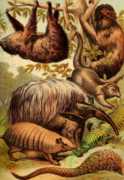 mammals_full_color-00328 - Sloth, Great Ant-Eater, Armadillo, Ai, Little Ant-Eater, Phatagin