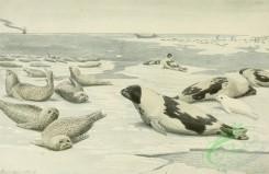 mammals_full_color-00353 - Harbor seal or Leopard Seal, Harp seal or Saddle-back or Greenland Seal