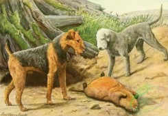 mammals_full_color-00363 - Airedale Terrier, Bedlington Terrier