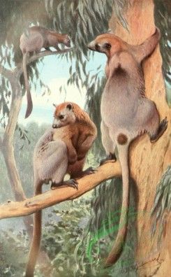 mammals_full_color-00422 - Bennett's tree-kangaroo