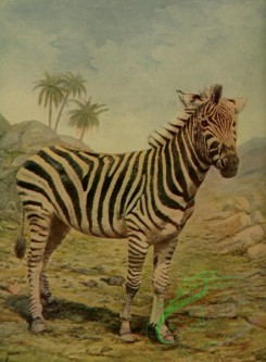mammals_full_color-00458 - Zebra