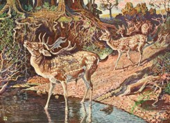 mammals_full_color-00511 - FALLOW DEER
